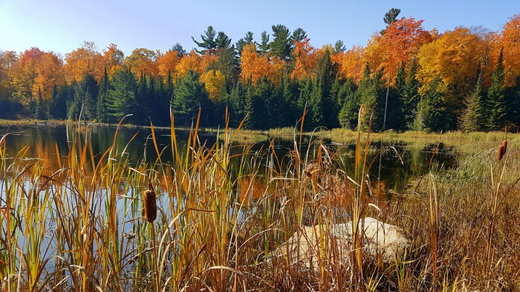 Gatineau Park during the Fall Rhapsody
